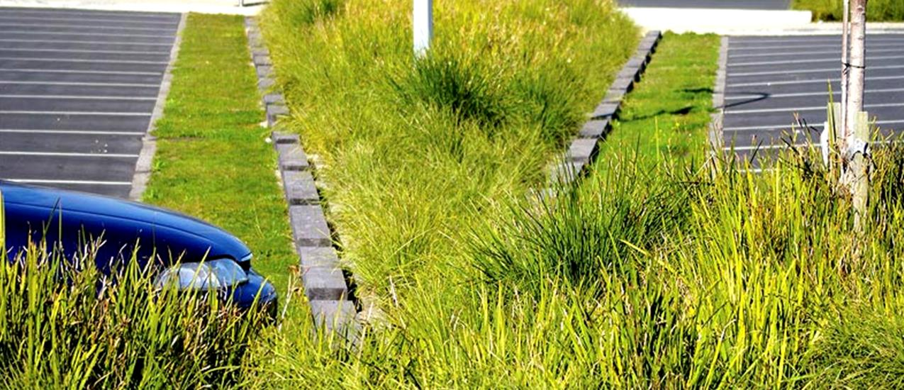 DLE_products_raingarden1