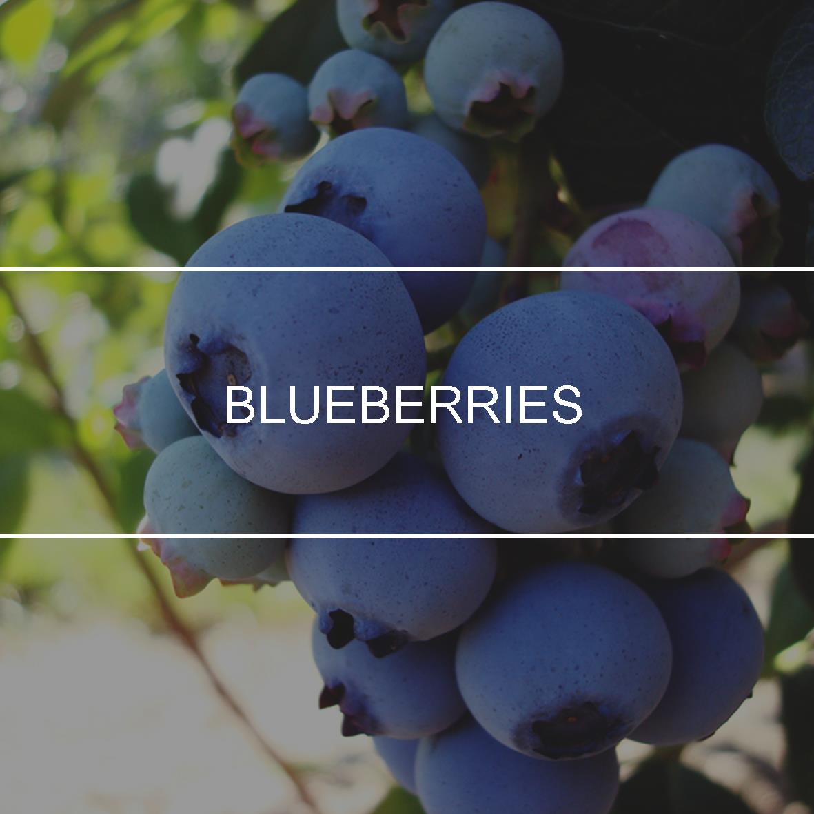 product_header_blueberries