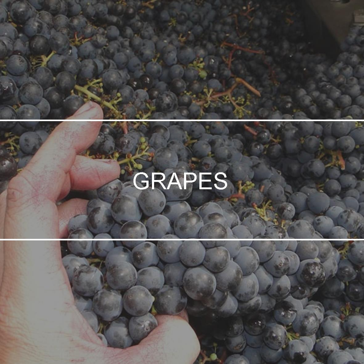 product_header_grapes