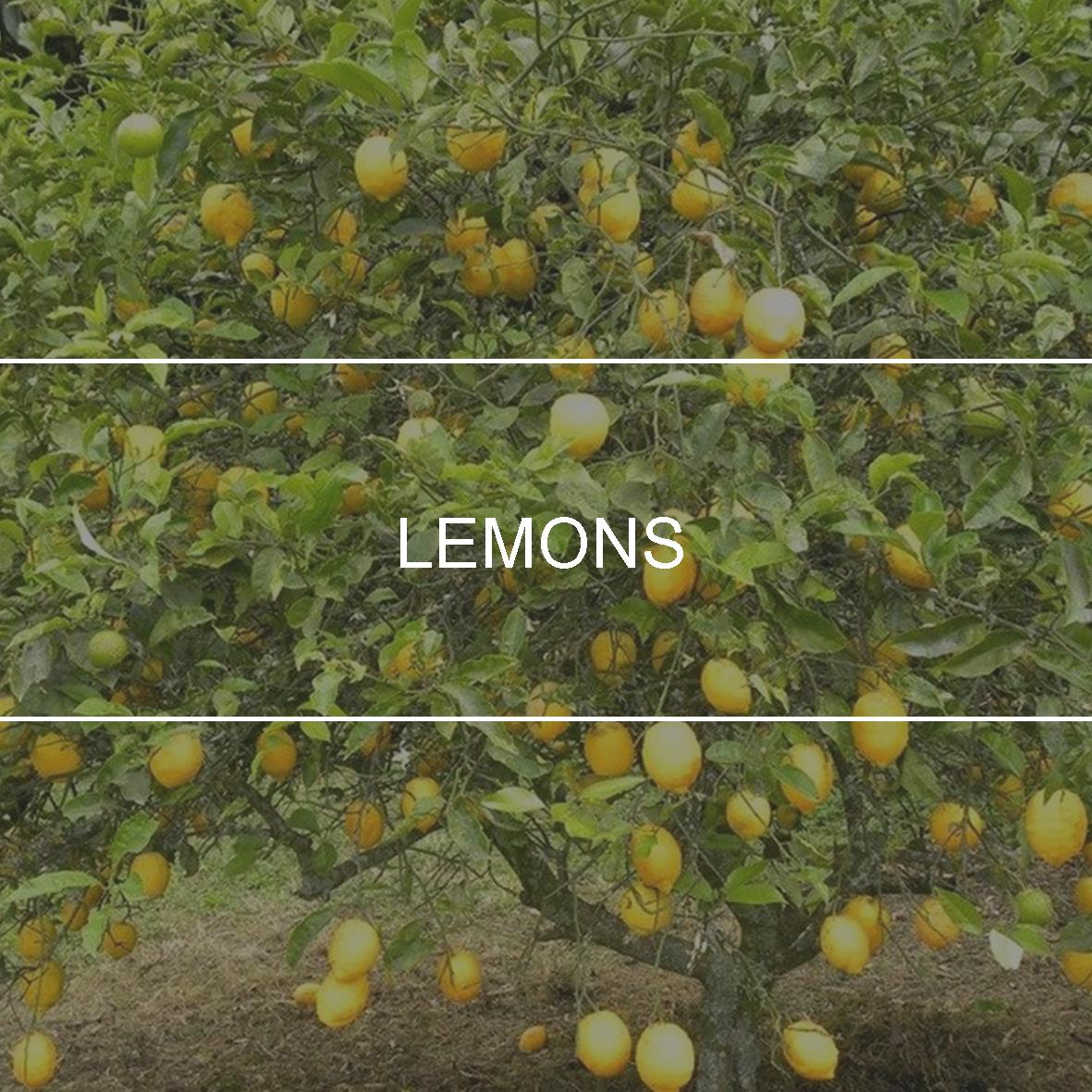 product_header_lemon