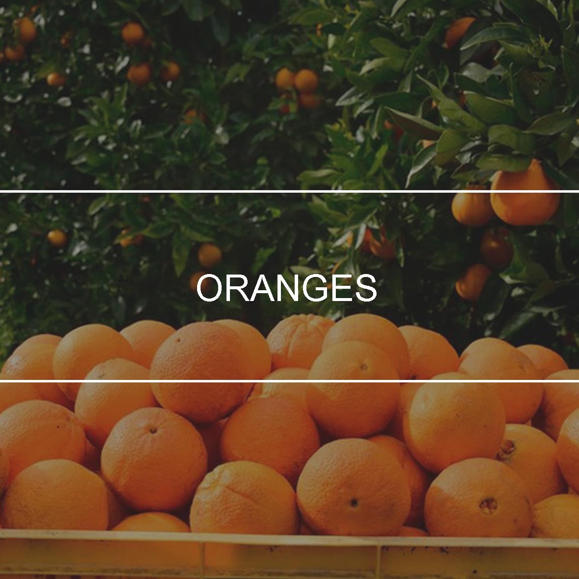 product_header_oranges